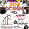 10月27日(土) 地域猫から社会猫へ FIPフリー 四谷猫廼舎 里親会(ボランティア募集中)