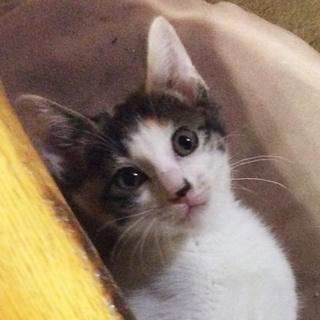 <トライアル中>美人な甘え上手 人・猫大好き