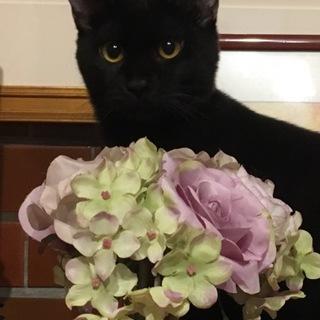 保護子猫  黒 ♂ クールでマイペース