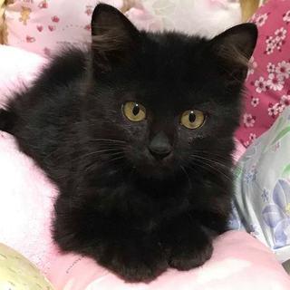 黒長毛子猫 ジジ 女の子