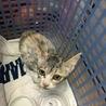 急募 可愛い子猫を助けてください