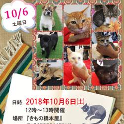 ★倉敷玉島・犬猫譲渡会開催★