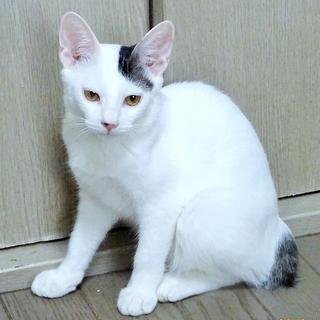 可愛い白黒☆443(よしみ)ちゃん 5ヵ月