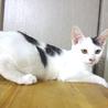 可愛い白黒☆443(よしみ)ちゃん 5ヵ月 サムネイル4