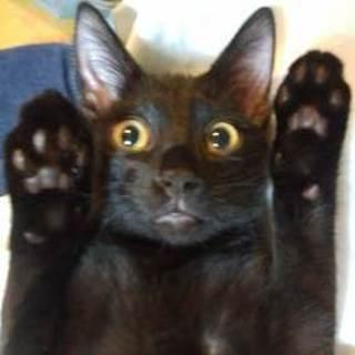 やんちゃで可愛い黒猫 スピネルくん