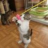甘えん坊すぎる子猫です。