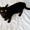 元気いっぱいの甘えんぼ黒猫男子!仮名:レベック♪ サムネイル4
