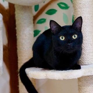 元気いっぱいの甘えんぼ黒猫男子!仮名:レベック♪