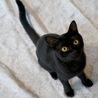 元気いっぱいの甘えんぼ黒猫男子!仮名:レベック♪ サムネイル2