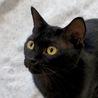 元気いっぱいの甘えんぼ黒猫男子!仮名:レベック♪ サムネイル3