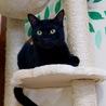元気いっぱいの甘えんぼ黒猫男子!仮名:レベック♪ サムネイル6