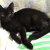 おとなしい黒猫☆大夢(ひろむ)ちゃん 4ヵ月 サムネイル2
