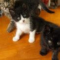 ブラック&ホワイト(4兄弟)
