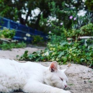 穏やかな、洋風な白ネコさん☆