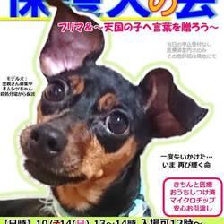 GO!保護犬GO☆保護犬の会&フリマ(屋内)@静岡県小山町・富士霊園近く