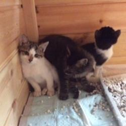 「横浜市泉区で猫の譲渡会 10月28日(日)」サムネイル1