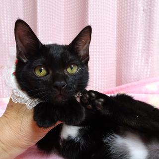 なれなれ黒猫☆ももクロちゃん 2ヵ月