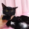 なれなれ黒猫☆ももクロちゃん 2ヵ月 サムネイル2