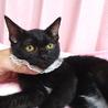 なれなれ黒猫☆ももクロちゃん 2ヵ月 サムネイル3