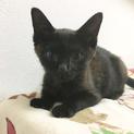 黒猫に見えるサビ猫さん!