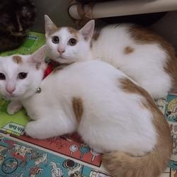 11/23本八幡駅前  猫譲渡会