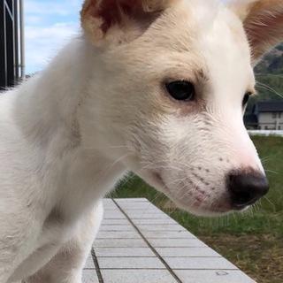 【保健所から引き出し】かわいい子犬です❗️