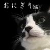 2歳の保護猫おにぎり♂