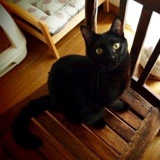なつこい黒猫【シャンクス】