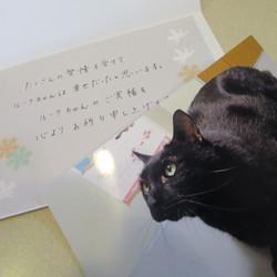 悲喜こもごも(3)感謝