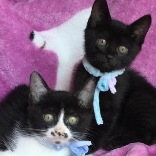元気でかわいい黒猫君と白黒君兄弟(=^x^=)
