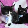 元気でかわいい黒猫君と白黒君兄弟(=^x^=) サムネイル2