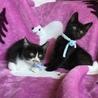 元気でかわいい黒猫君と白黒君兄弟(=^x^=) サムネイル3