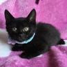 元気でかわいい黒猫君と白黒君兄弟(=^x^=) サムネイル4