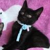 元気でかわいい黒猫君と白黒君兄弟(=^x^=) サムネイル5