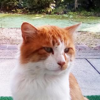 長毛な美猫さん
