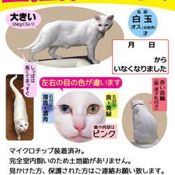 いなくなってないけど迷い猫ポスター作ってみた②