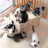特定非営利活動法人猫の幼稚園