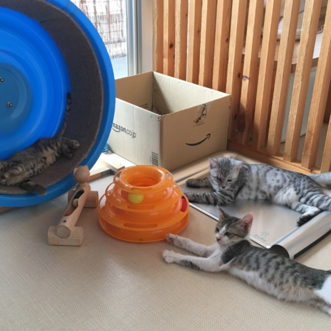 特定非営利活動法人猫の幼稚園のカバー写真
