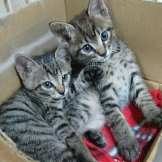 まだまだ小さなキジっ子兄妹