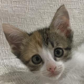 生後2カ月!尻尾が可愛い三毛猫!
