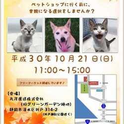 静岡市清水区で開催! 犬猫譲渡会