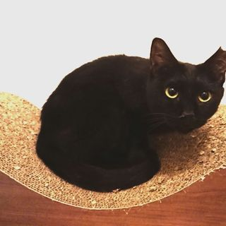 引っ込み思案だけどとっても美人!黒猫ネロちゃん♀