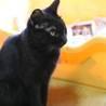 気のよい美人!黒猫ネロちゃん♀ サムネイル2