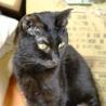 気のよい美人!黒猫ネロちゃん♀ サムネイル3