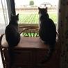 先住猫と後輩猫の仲について