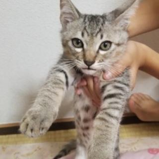 ♂️猫です。
