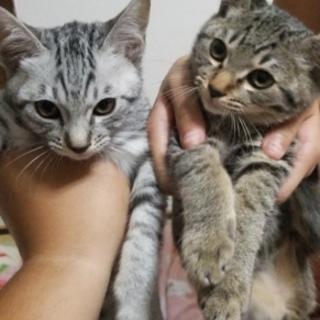 右の♀️猫です。