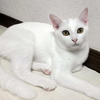 可愛い元気な白猫の女の子♪