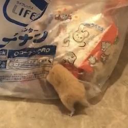 タイトル「ゴミ袋をあさるネズミ」