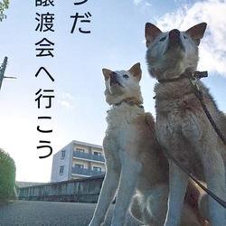 犬猫譲渡会 ゆめマート